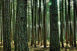 wood-3156419_640